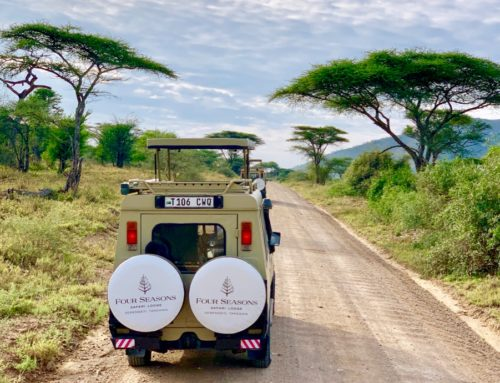 Four Seasons Serengeti And Its Luxury Safari!