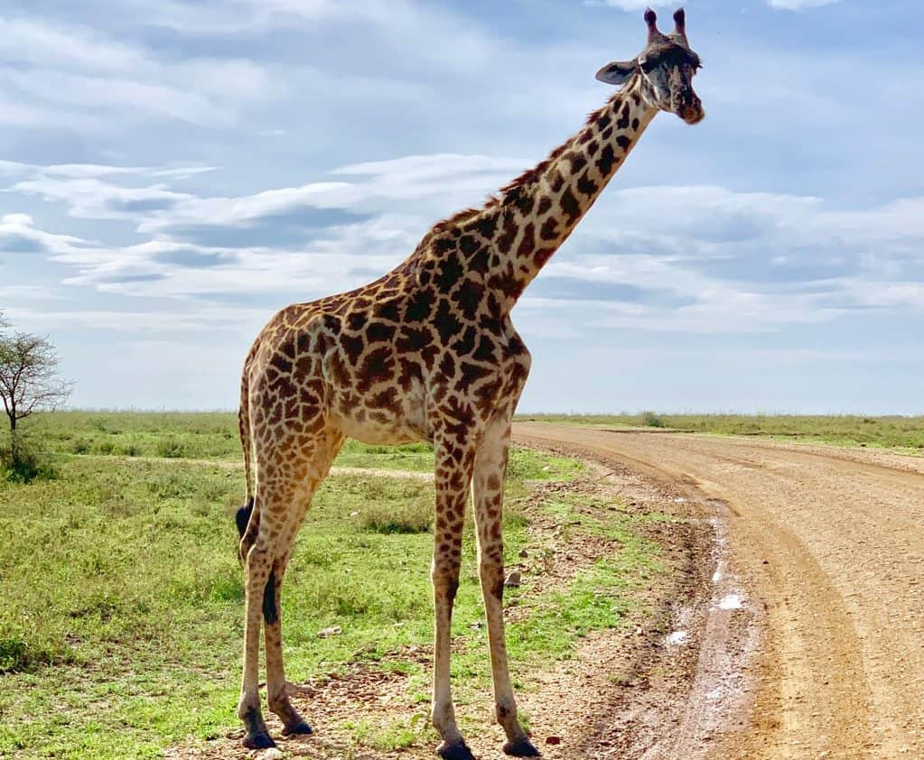 animals on a safari, animals on an African safari, safari animal list, safari animals list, animals you will see on a safari, #Africa #African #safari