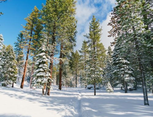 How to Plan the Perfect Lake Tahoe Winter Vacation