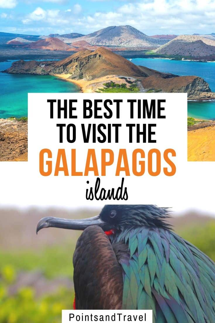 Best Time to Visit the Galapagos, best time to travel to galapagos, best time of year to visit Galapagos, best time to go to Galapagos Islands, Best time to visit the Galapagos Islands, #Galapagos #Ecuador