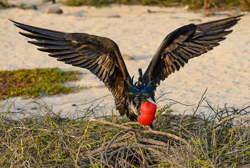 visit Galapagos Islands, Why visit the Galapagos Islands, Facts about the Galapagos Islands, Visiting the Galapagos Islands, Galapagos Islands Wildlife #Galapagos #Ecuador