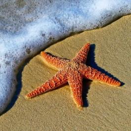 Key West Excursions, what to do in Key West, #KeyWest #Florida #FL