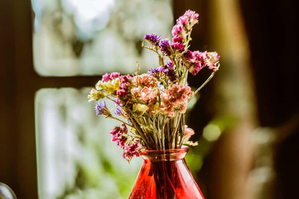 flowers in Mineral de pozos