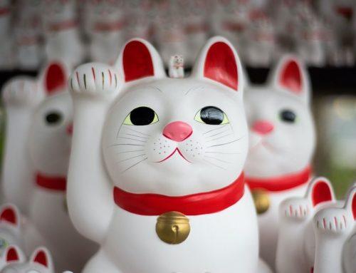Japanese Culture Experiences