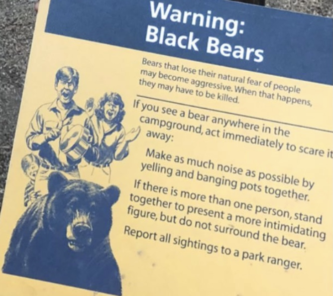 Black Bear Warning