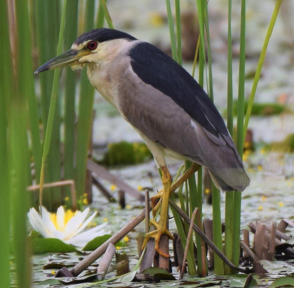 Bird at Sheldon Lake State Park