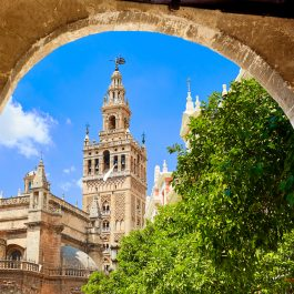 Seville cathedral Giralda tower from Alcazar