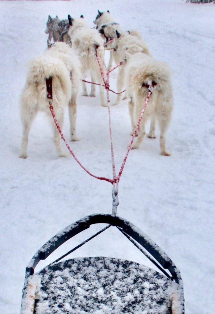 Alaskan Huskies pulling a sled