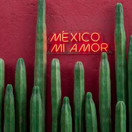 where to stay in Mexico City, Mexico mi amor, cacti